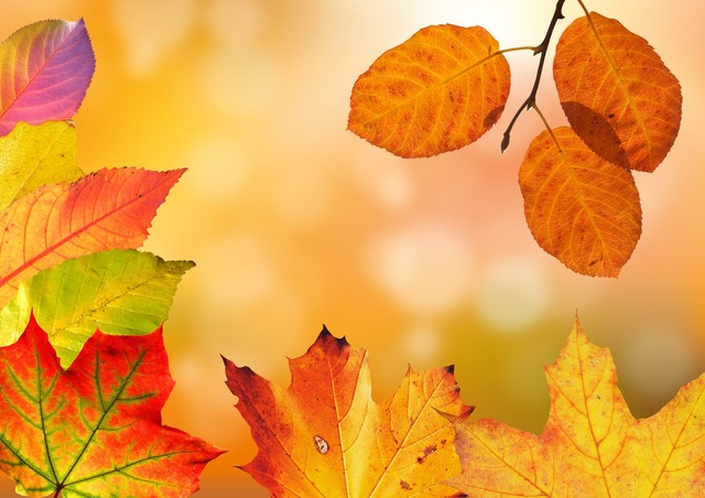 Self-Love Practice: Eating with the Seasons – Fall